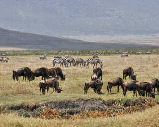 Livingwalls Fototapete «Tansania» DD101085