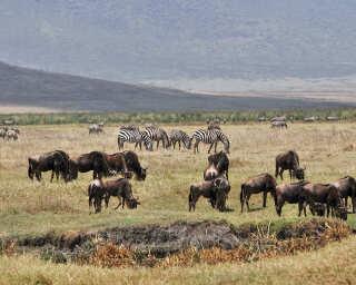 Livingwalls Fototapete «Tansania» DD101086