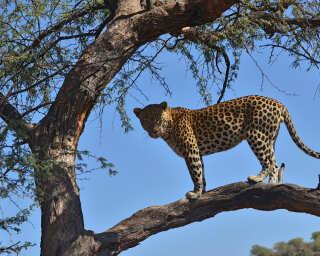Livingwalls Fototapete «Tansania» DD101103