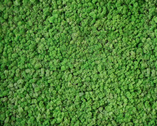 Architects Paper Photo wallpaper «Real Moss» DD108835