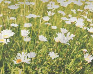 Fototapete «FlowerConcrete» DD108980