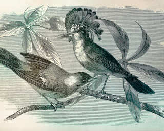 Fototapete «vintage birds1» DD110431
