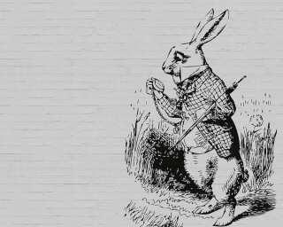 Fototapete «bunny 1» DD110441