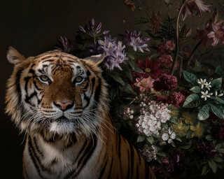 Kathrin und Mark Patel impression numérique «wildlife 1» DD110616