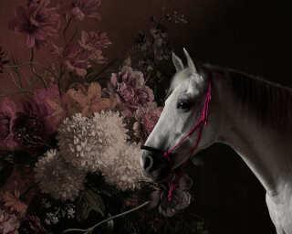 Fototapete «horses 1» DD110641