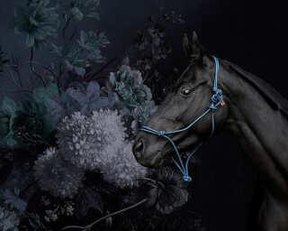 Kathrin und Mark Patel Fototapete «horses 2» DD110646