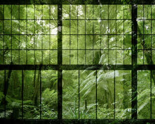 Photo wallpaper «rainforest 2» DD113742