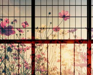 Photo wallpaper «meadow 1» DD113747