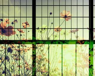 Fototapete «meadow 2» DD113752