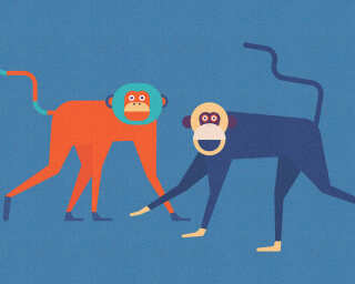 Kathrin und Mark Patel Photo wallpaper «monkeyBusines2» DD113817