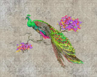 Fototapete «peacock 1» DD114307
