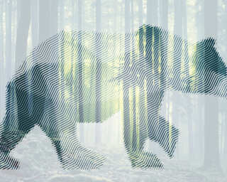 Architects Paper Photo wallpaper «BearForest1» DD118110