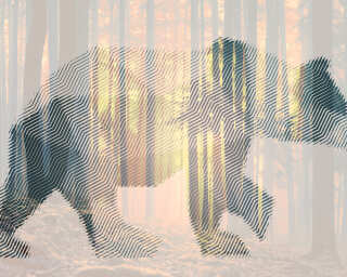 Architects Paper Photo wallpaper «BearForest2» DD118115
