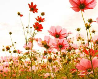 Livingwalls impression numérique «FlowerMeadow1» DD118598