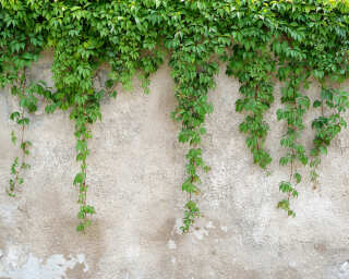 Livingwalls Photo wallpaper «ClimbingLeaves» DD118712