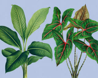 Kathrin und Mark Patel Fototapete «leaf garden 1» DD121948