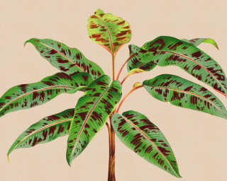 Kathrin und Mark Patel Fototapete «leaf garden 4» DD121960