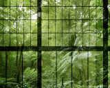 Kathrin und Mark Patel Fototapete «rainforest 2» DD113742