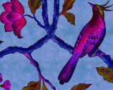 Kathrin und Mark Patel Fototapete «birdOfParadis1» DD113837