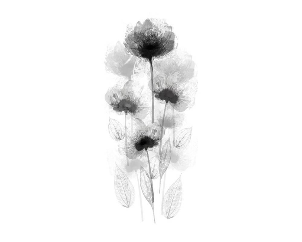 Esprit Home Photo Wallpaper Desert Flower Black 470564