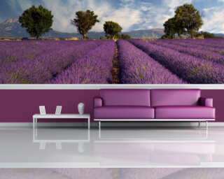 Photo wallpaper «Lavender» 031010