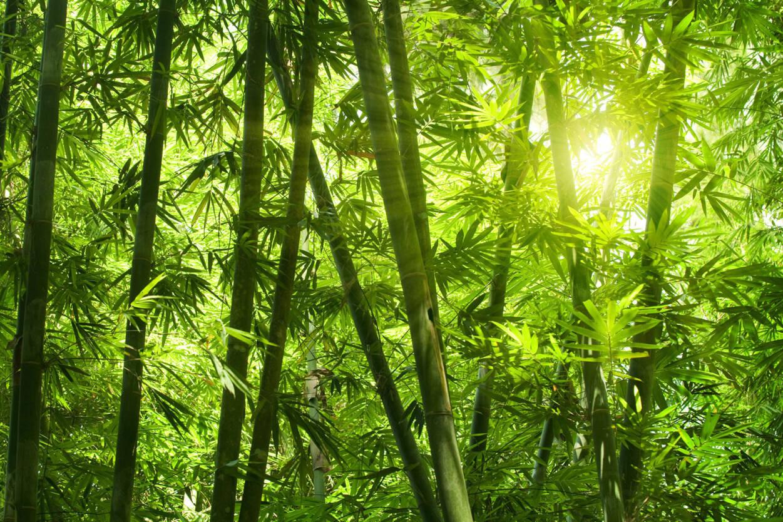 livingwalls fototapete bambuswald 036300. Black Bedroom Furniture Sets. Home Design Ideas