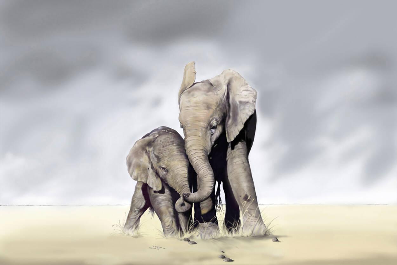 Livingwalls Photo wallpaper «Elephant Family» 036440