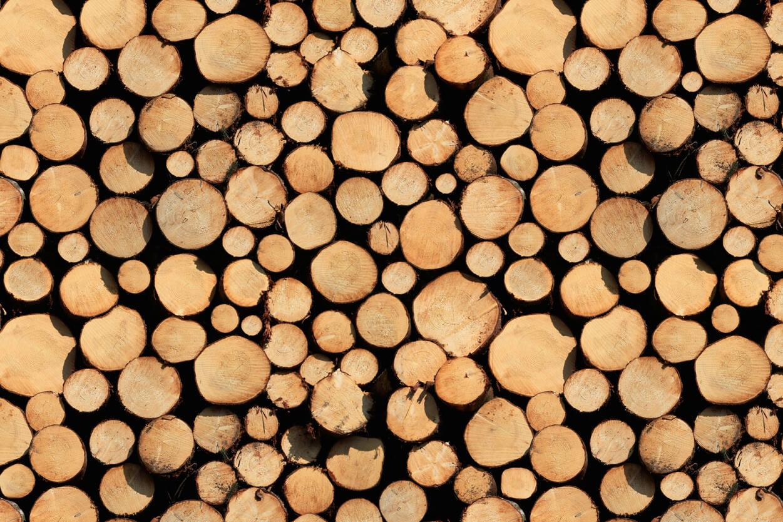 Architects paper fototapete stammholz 470113 for Tapetenmuster bestellen
