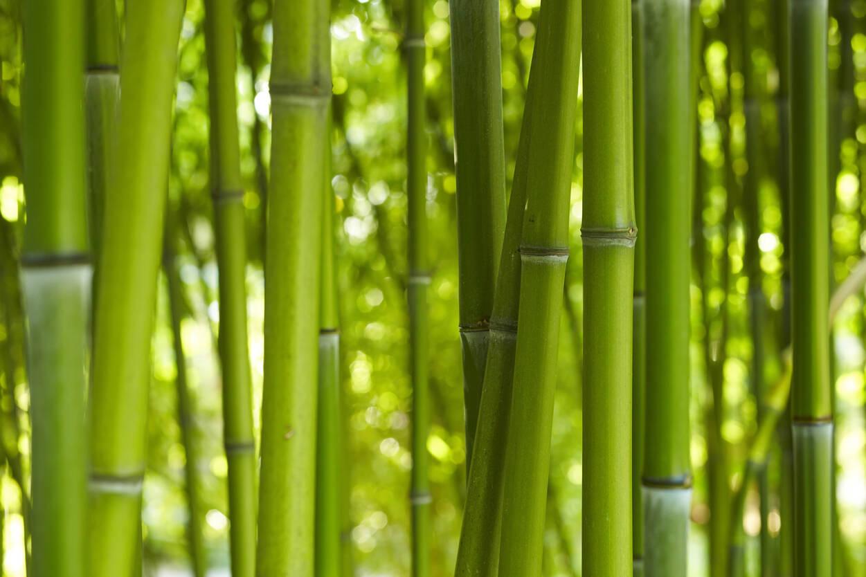Livingwalls Фотообои Bambooin Daylight 470322