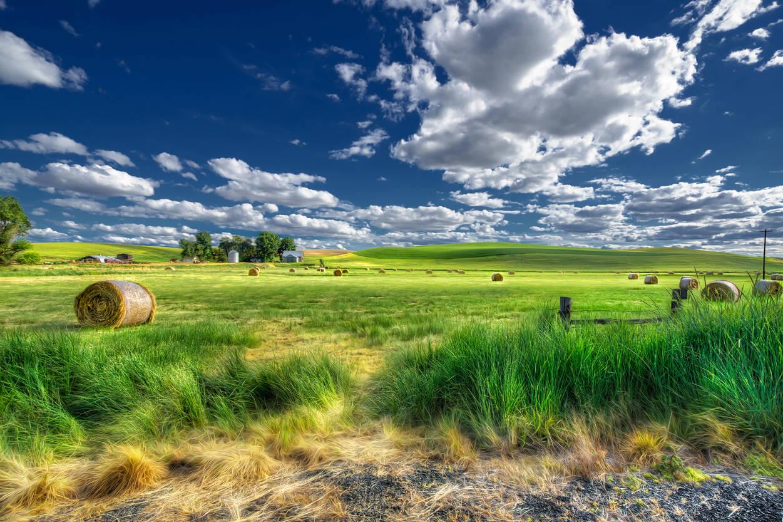 Selbstklebende Tapete Gras : 470450: Land, Landschaft, Wiese, Gras, Wolke, Himmel, Panorama, Natur