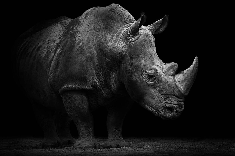Architects Paper Photo wallpaper «Rhino» 470509