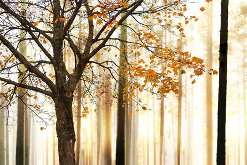 Livingwalls Photo wallpaper Tree Detail M 470650