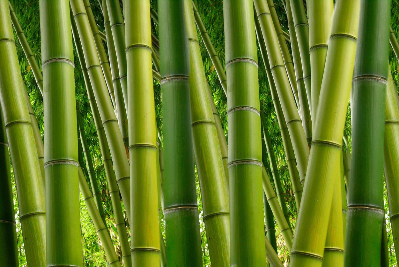 livingwalls fototapete bambus 2 xxl 470680. Black Bedroom Furniture Sets. Home Design Ideas