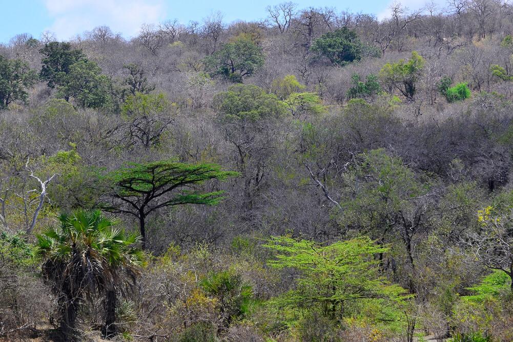Livingwalls Фотообои Tansania DD100608