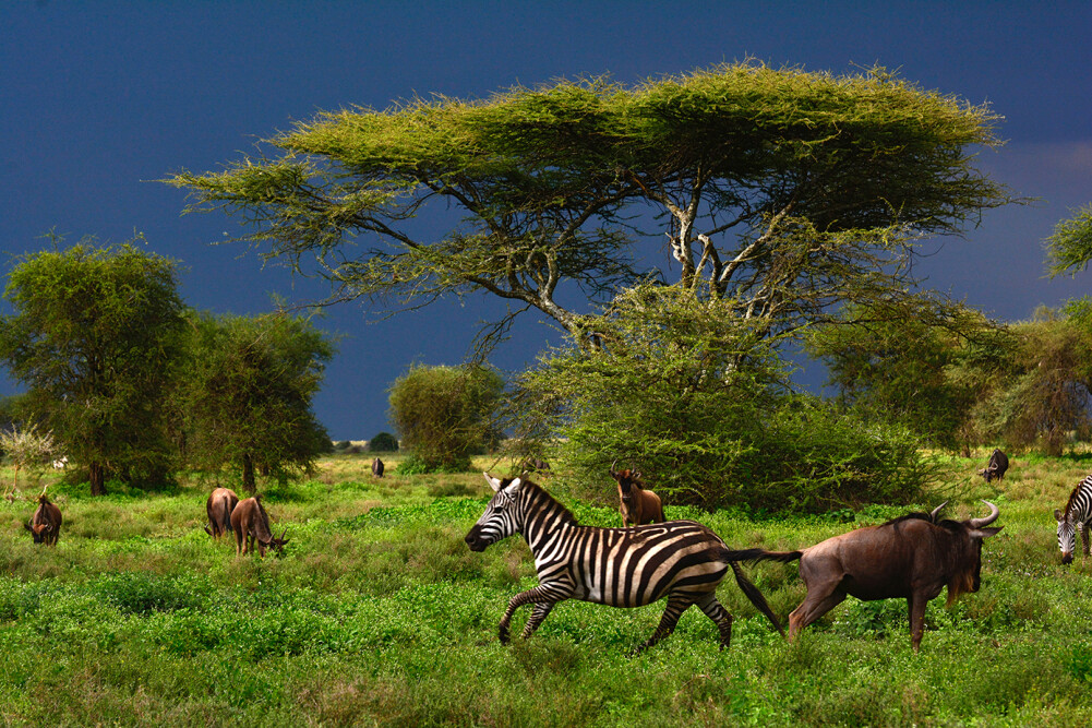 Livingwalls Фотообои Tansania DD100720