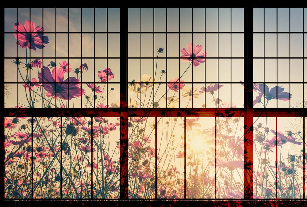 Kathrin und Mark Patel Fototapete meadow 1 DD113747