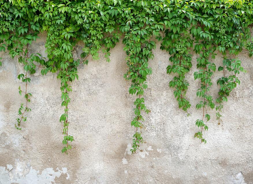 Livingwalls Фотообои ClimbingLeaves DD118712