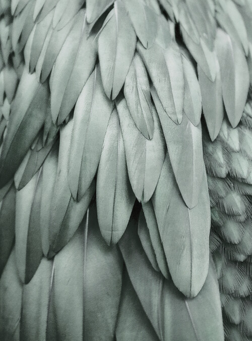 Livingwalls Fototapete Feathers2 DD119845