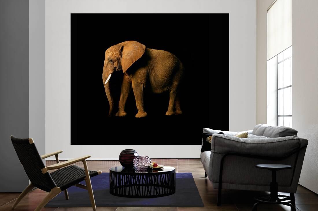 architects paper fototapete elefant l 470034. Black Bedroom Furniture Sets. Home Design Ideas