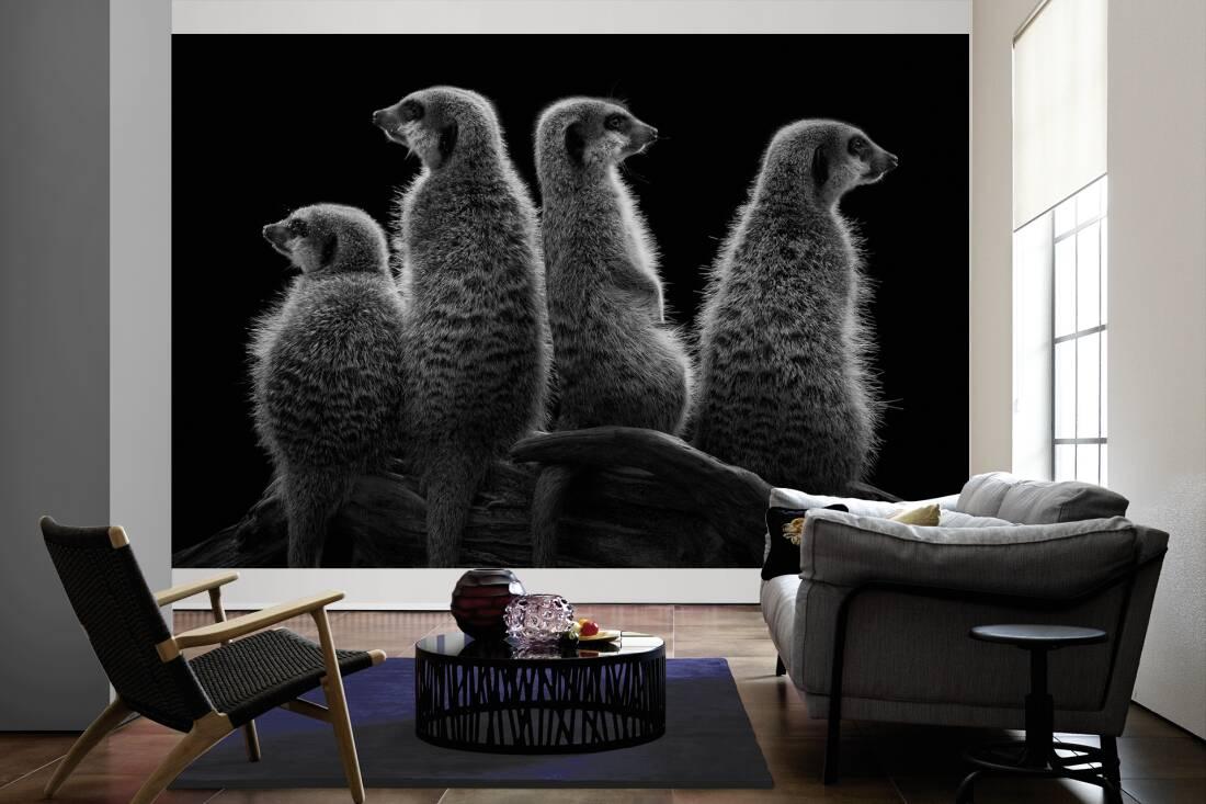 Architects paper fototapete «erdmännchen in schwarz weiß xl» 470508