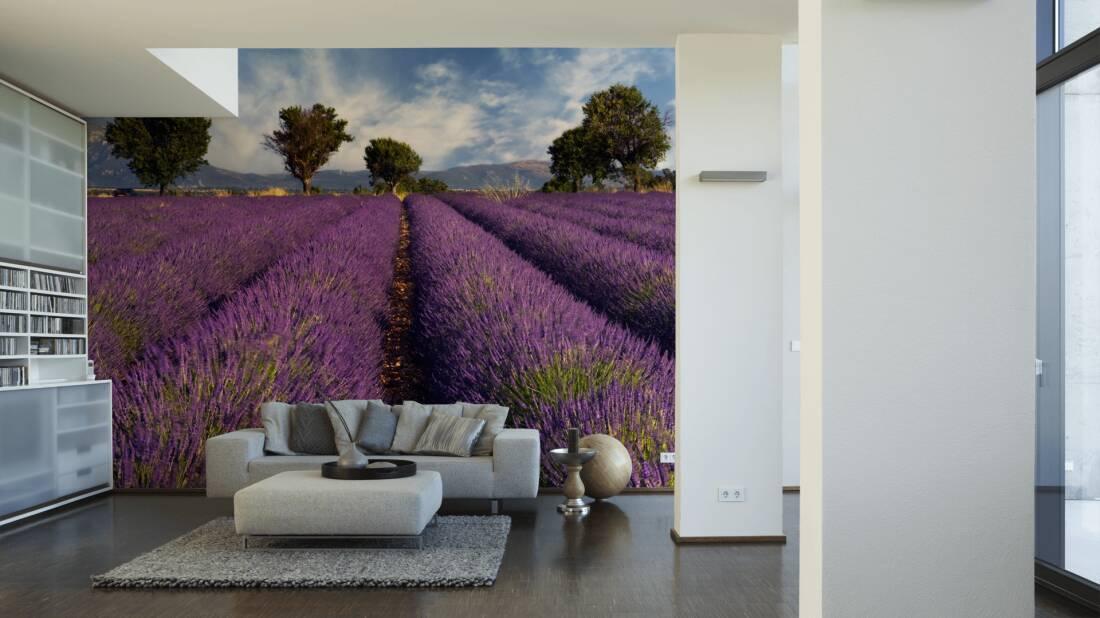 Livingwalls Fototapete Lavender 031010; simuliert auf der Wand