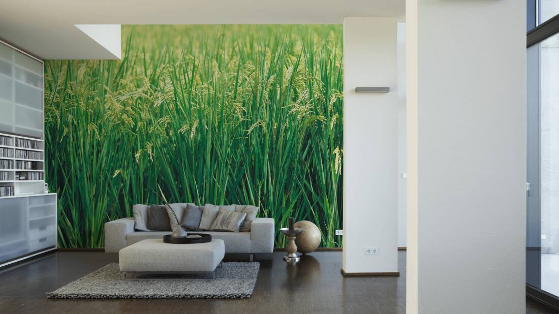 Livingwalls Fototapete Grass 031130; simuliert auf der Wand
