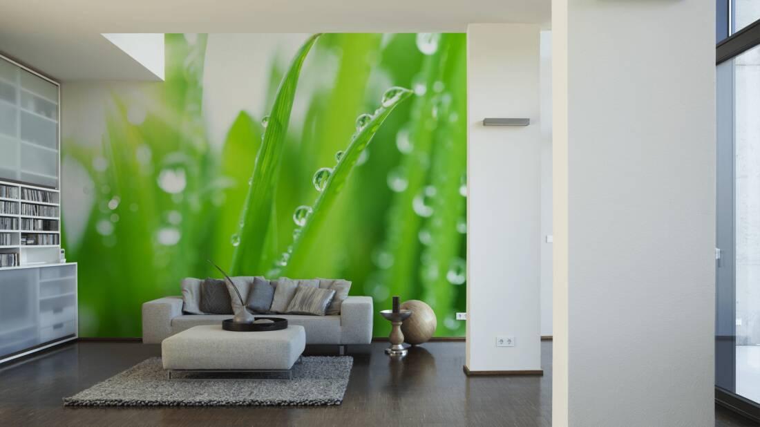 Livingwalls Fototapete «gras Mit Regentropfen» 036330 Fototapete Grn Wohnzimmer