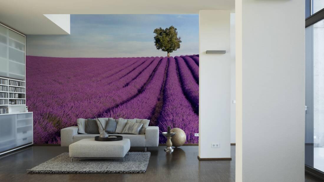 Livingwalls Fototapete Lavender field 036500; simuliert auf der Wand