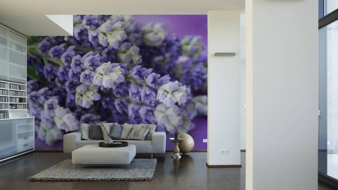 Livingwalls Fototapete Lavender bunch 036520; simuliert auf der Wand