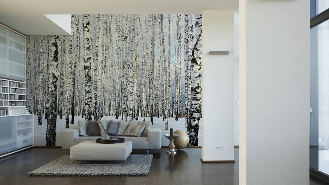 livingwalls fototapete birkenwald im winter 470652. Black Bedroom Furniture Sets. Home Design Ideas