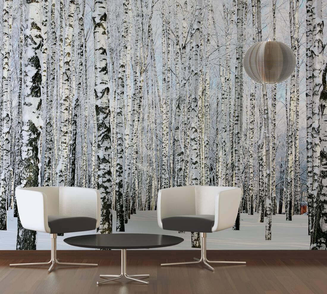 livingwalls fototapete birkenwald im winter 470652. Black Bedroom Furniture Sets. Home Design Ideas
